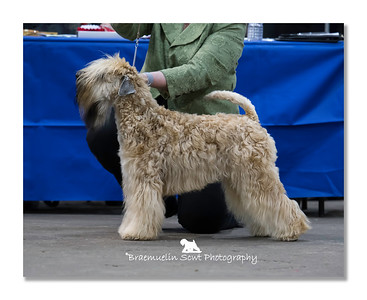 Limit Dog - 1st, DCC & Best Of Breed
