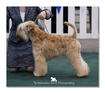 Puppy Dog - 3rd