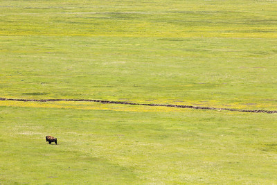 All Alone | Yellowston National Park, WY