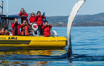 Whale Watching, Tadoussac, QC