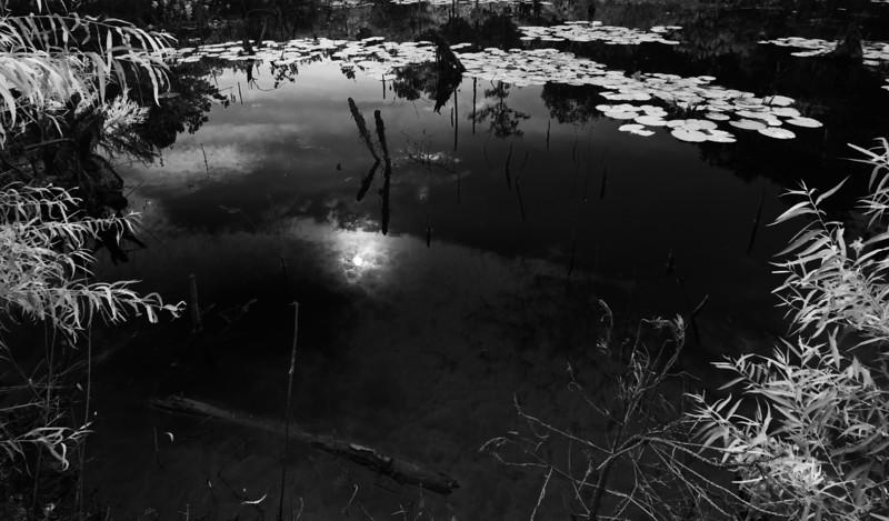 Brunswick Co. Swamp