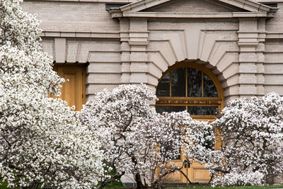 165, A grove of star magnolias has graced the Library building landscape for many decades.