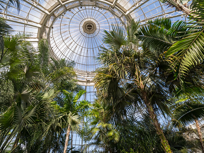 page 85, The dome of the Palm Gallery, which rises to ninety feet (or about nine stories) above the floor, is made entirely of glass and steel.
