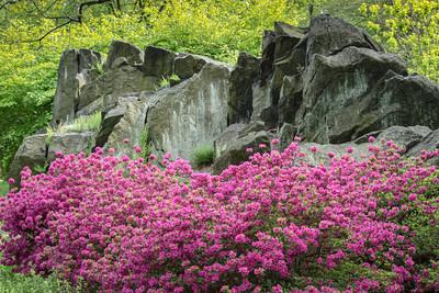 Azalea Garden, 2013