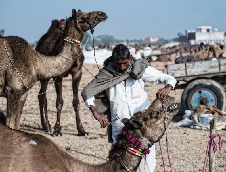 Nagaur and Baneshwar, Rajasthan, India