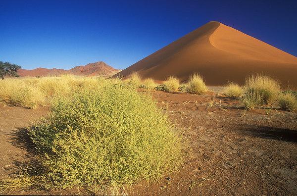 Namibia. John Chapman.