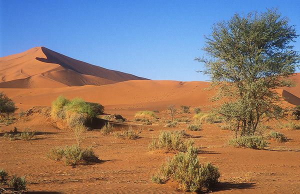 Namibia John Chapman.