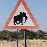 There must be elephants in the area