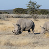 Two White Rhinoceros