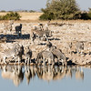 Burchell's zebras by a waterhole in Etosha Nacional Park