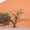 Tree at the foot of Dune 45 in Sossusvlei