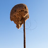Sociable Weaver nest on a pole
