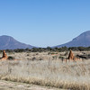 Two pyramid-shaped mountains with red termite mounds in the foreground