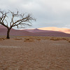 Barren tree in Sossusvlei against purple and yellow sand dunes
