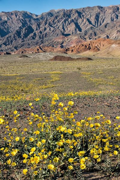 CA Death Valley