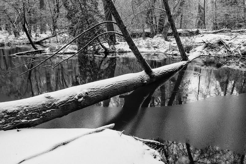 NC, Durant Nature Park
