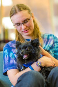 Freshman math major Erika Blanchard takes advantage of some quality time with Penny the pomeranian during Dogs in the Library day. The event is offered during finals week to provide students with a bit of stress relief.  Filename: LIF-13-4023-6.jpg
