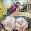 "Art major Ian Wilkinson rolls out clay to cover turkeys in his ceramics lab in the UAF Fine Arts complex. The birds are covered in clay and then baked in a kiln before being served up during a feast for hungry students on campus over Thanksgiving break.  <div class=""ss-paypal-button"">Filename: LIF-12-3659-11.jpg</div><div class=""ss-paypal-button-end"" style=""""></div>"