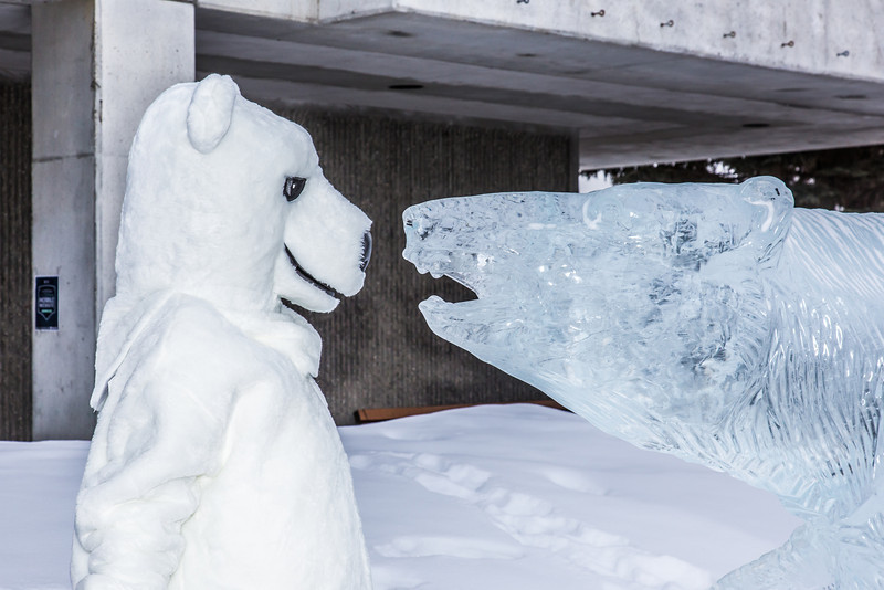 """The UAF mascot stares down the ice carving in front of the Gruening Building.  <div class=""""ss-paypal-button"""">Filename: LIF-14-4101-71.jpg</div><div class=""""ss-paypal-button-end"""" style=""""""""></div>"""