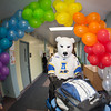 "The UAF Nanook mascot helps the orientation leaders by taking a load of personal belongings up to its designated dorm room during Move-In Day Sunday, August 26, 2012 in front of the Moore, Bartlett, and Skarland complex.  <div class=""ss-paypal-button"">Filename: LIF-12-3511-51.jpg</div><div class=""ss-paypal-button-end"" style=""""></div>"