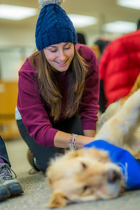 Laurence Coulombe, an exchange student from Montreal, spends some quality time with new friends during Dogs in the Library day. The event is offered during finals week to provide students with a bit of stress relief.  Filename: LIF-13-4023-50.jpg