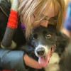 """Music major Elsbeth Cheyne spends some quality time with a happy border collie during Dogs in the Library day. The event is offered during finals week to provide students with a bit of stress relief.  <div class=""""ss-paypal-button"""">Filename: LIF-13-4023-40.jpg</div><div class=""""ss-paypal-button-end"""" style=""""""""></div>"""