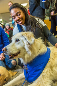 Alexandria Charles, a junior biology major from California, spends some quality time with Yukon the golden retriever on Dogs in the Library day. The event is offered during finals week to provide students with a bit of stress relief.  Filename: LIF-13-4023-82.jpg