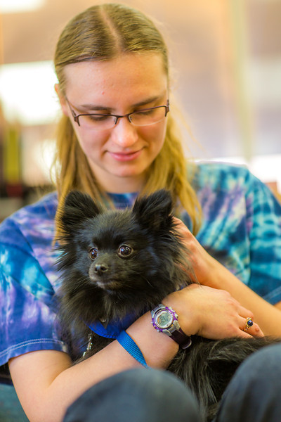 "Freshman math major Erika Blanchard takes advantage of some quality time with Penny the pomeranian during Dogs in the Library day. The event is offered during finals week to provide students with a bit of stress relief.  <div class=""ss-paypal-button"">Filename: LIF-13-4023-8.jpg</div><div class=""ss-paypal-button-end"" style=""""></div>"