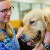 "Freshman math major Erika Blanchard takes advantage of some quality time with Eric the golden retriever during Dogs in the Library day. The event is offered during finals week to provide students with a bit of stress relief.  <div class=""ss-paypal-button"">Filename: LIF-13-4023-28.jpg</div><div class=""ss-paypal-button-end"" style=""""></div>"