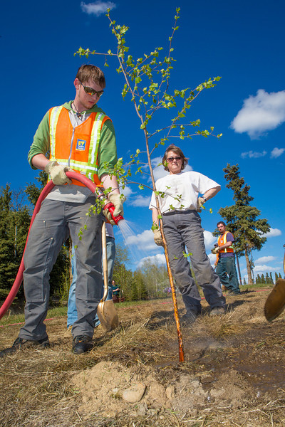 """Grounds crew member Tyler Pruce waters a freshly planted tree during an Arbor Day ceremony on UAF's West Ridge.  <div class=""""ss-paypal-button"""">Filename: LIF-12-3415-11.jpg</div><div class=""""ss-paypal-button-end"""" style=""""""""></div>"""