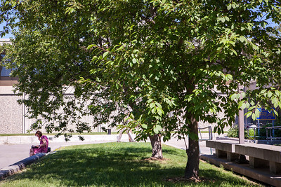 A woman reads under the shade of a tree at Constitution Park during lunch time.  Filename: LIF-13-3866-7.jpg