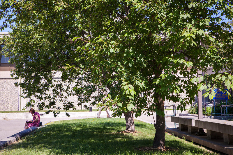 """A woman reads under the shade of a tree at Constitution Park during lunch time.  <div class=""""ss-paypal-button"""">Filename: LIF-13-3866-7.jpg</div><div class=""""ss-paypal-button-end"""" style=""""""""></div>"""