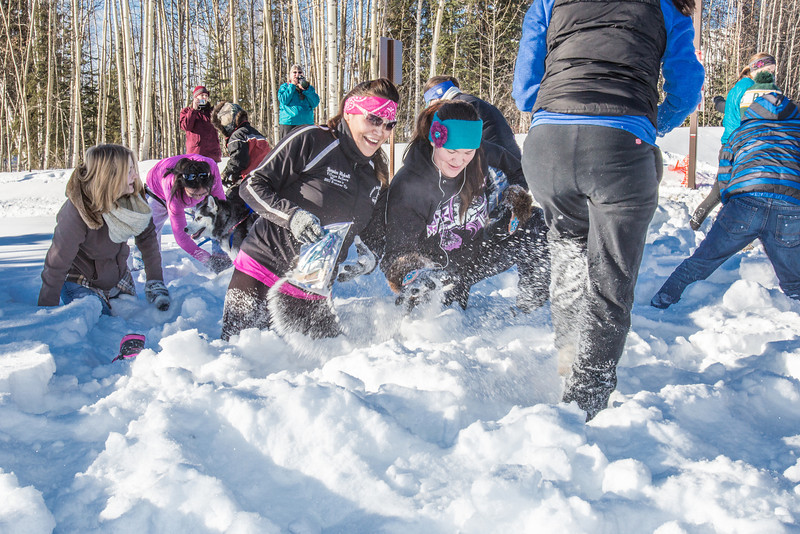 """Participants in the second annual Troth Yeddha' Snowshoe Scramble dig for prizes buried in the snow after the race Saturday, March 1 by the Reichardt Building. The event hopes to build awarness for a proposed park to help celebrate Alaska's Native culture.  <div class=""""ss-paypal-button"""">Filename: LIF-14-4079-102.jpg</div><div class=""""ss-paypal-button-end"""" style=""""""""></div>"""
