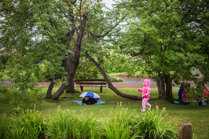 """People brave the weather with their umbrellas as they listen to music by the Opera Fairbanks Orchestra Brass at the Georgeson Botanical Garden as part of Summer Sessions' Music in the Garden series.  <div class=""""ss-paypal-button"""">Filename: LIF-13-3884-10.jpg</div><div class=""""ss-paypal-button-end"""" style=""""""""></div>"""