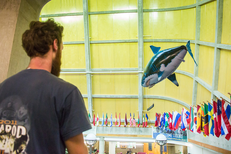 "A remote-controlled helium-filled great white shark was seen patrolling the open air inside Wood Center recently.  <div class=""ss-paypal-button"">Filename: LIF-12-3555-34.jpg</div><div class=""ss-paypal-button-end"" style=""""></div>"