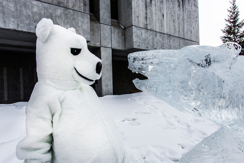 """The UAF mascot stares down the ice carving in front of the Gruening Building.  <div class=""""ss-paypal-button"""">Filename: LIF-14-4101-18.jpg</div><div class=""""ss-paypal-button-end"""" style=""""""""></div>"""