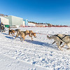 "Sled dogs pull riders on another run around Beluga Field during a mushing event in front of the SRC  Saturday, Feb. 22 as part of UAF's 2014 Winter Carnival.  <div class=""ss-paypal-button"">Filename: LIF-14-4089-41.jpg</div><div class=""ss-paypal-button-end"" style=""""></div>"