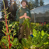 "Alexander Bergman harvests vegetables from a garden maintained by students on the UAF Sustainable Task Force on an August morning.  <div class=""ss-paypal-button"">Filename: LIF-12-3487-33.jpg</div><div class=""ss-paypal-button-end"" style=""""></div>"