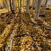 Autumn in Dixie