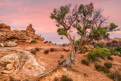 Morning scene with twisted tree and rock formations during a stormy day in Arches National Park