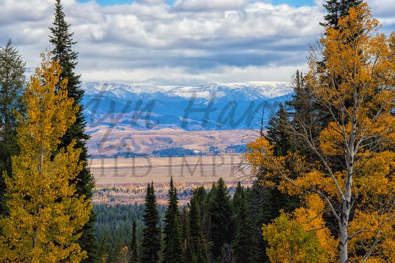 Jackson Hole Valley