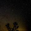 Joshua Tree and Night Sky