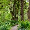 Ho Rain Forest