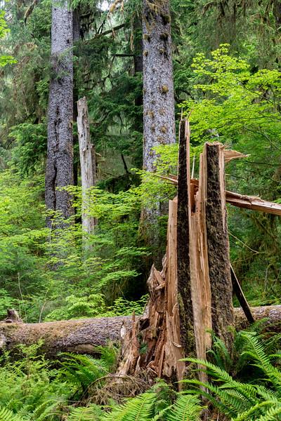 Ho Rain Forest Stump