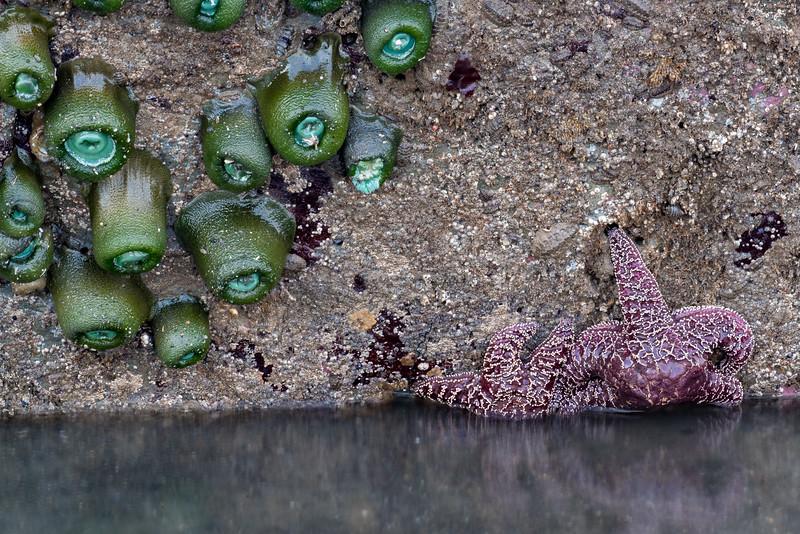 Starfish and Sea  Urchin