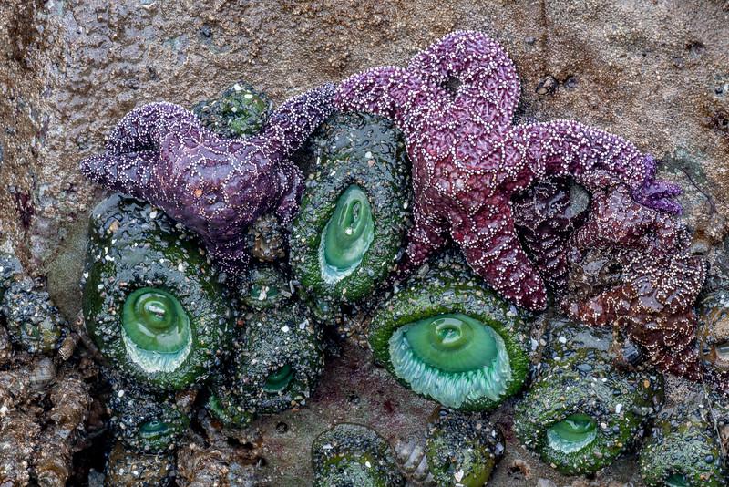 Sea Urchin and Starfish