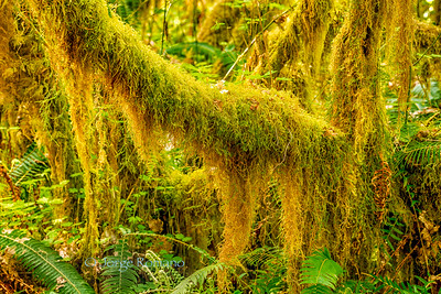 Branches with Moss