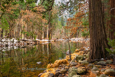 View of the Merced River and surrounding trees in Winter, Yosemite National Park