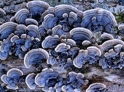 Fungi in Blue