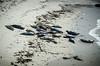 3.15.2013 - Sunbathing Sea Lions